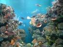 Barcelona-akvarium