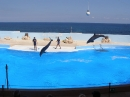 Mediteraneo delfini show