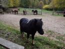 Ranch_Bubac_0538